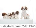 小狗 75861945