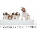 小狗 75861946