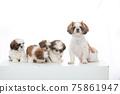小狗 75861947