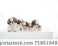 小狗 75861948