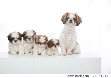 小狗 75861949