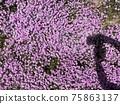 庭園 花卉園 花園 75863137
