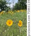 花 庭園 花卉園 75863139