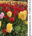 花 庭園 花卉園 75863141