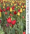 花 庭園 花卉園 75863142