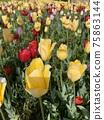 花 庭園 花卉園 75863144
