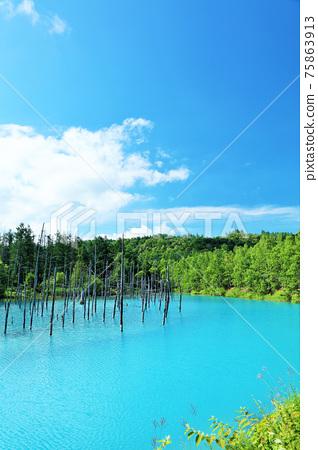 藍天和藍色池塘在北海道夏天 75863913