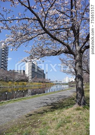 cherry blossom, cherry tree, bloom 75865557