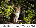 tabby white cat outdoors portrait in nature 75875764