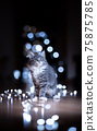 maine coon kitten portrait with christmas lights bokeh 75875785