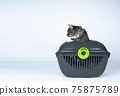 cat inside of pet carrier getting out 75875789