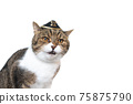 funny cat wearing tiny pirate hat 75875790