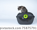 cat inside of pet carrier getting out 75875791