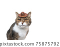 tabby white cat wearing tiny cowboy hat 75875792
