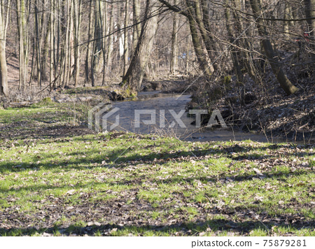 View of small spring stream in Kunraticky les forest park with bare trees early spring sunny day. Prague, Czech Republic 75879281