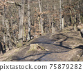 Narrow foot path in Kunraticky les forest park with bare trees early spring sunny day. Prague, Czech Republic 75879282