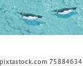 企鵝在水下游泳 75884634