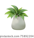 White house plant pot 75892204
