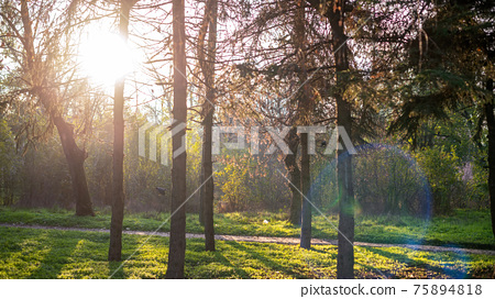 Naturscape in a forest 75894818