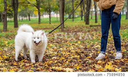 Woman with her dog in a park, autumn 75894850