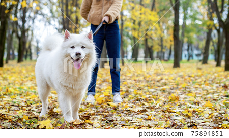 Woman with her dog in a park, autumn 75894851