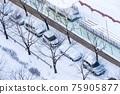 冬天 停車 木 75905877