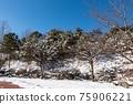 木 冬天 山 75906221