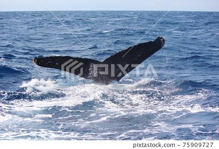 海 大海 海洋 75909727