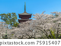 five-storied pagoda, cherry blossom, spring 75915407