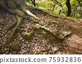 森林 樹林 植物 75932836