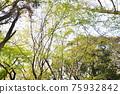 森林 樹林 翠綠 75932842