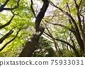 森林 樹林 翠綠 75933031