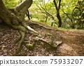 樹木 樹 木頭 75933207