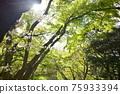 福岡 翠綠 鮮綠 75933394