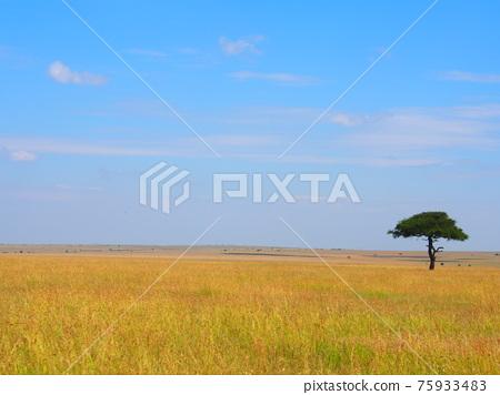 landscape, scenery, scenic 75933483