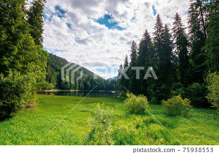mountain lake landscape in summer. beautiful scenery of synevyr national park, ukraine. body of water among the forest. great view and amazing attarction of carpathian nature. travel europe concept 75938553