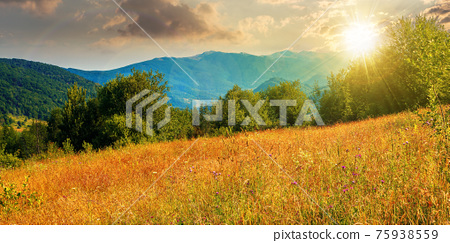 rural field in mountains at sunset. beautiful summer landscape of carpathian countryside in evening light. trees on the hill, forested ridge in the distance beneath a blue sky with clouds. 75938559