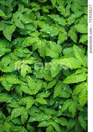dew drops on the green leaves. wonderful close up nature background. freshness concept 75938627