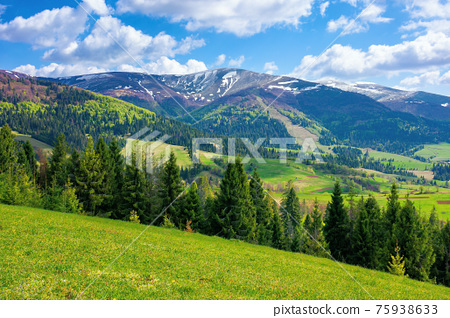 stunning mountain landscape. beautiful alpine nature view with spruce forest. grassy meadow on the hill. fluffy clouds on a blue sky above the distant ridge and valley. 75938633