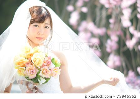 만개 한 벚꽃 벚꽃 배경 웨딩 일본인 신부 초상화 신부 결혼식 전에 촬영 사진 75946562