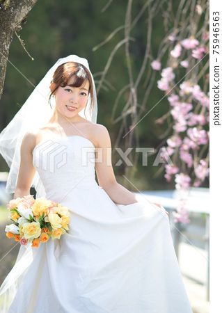 만개 한 벚꽃 벚꽃 배경 웨딩 일본인 신부 초상화 신부 결혼식 전에 촬영 사진 75946563