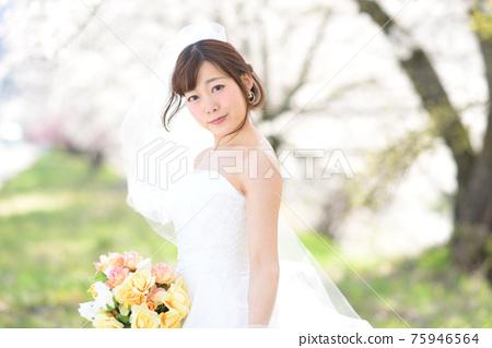 만개 한 벚꽃 벚꽃 배경 웨딩 일본인 신부 초상화 신부 결혼식 전에 촬영 사진 75946564