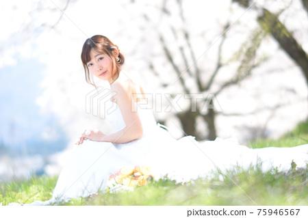 만개 한 벚꽃 벚꽃 배경 웨딩 일본인 신부 초상화 신부 결혼식 전에 촬영 사진 75946567
