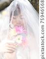 盛開的櫻花,櫻花背景,婚禮,日本新娘的肖像,新娘,婚禮前照片 75946568