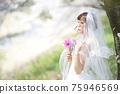 盛開的櫻花,櫻花背景,婚禮,日本新娘的肖像,新娘,婚禮前照片 75946569