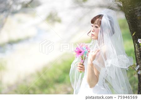 만개 한 벚꽃 벚꽃 배경 웨딩 일본인 신부 초상화 신부 결혼식 전에 촬영 사진 75946569