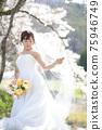 盛開的櫻花,櫻花背景,婚禮,日本新娘的肖像,新娘,婚禮前照片 75946749