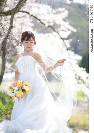 만개 한 벚꽃 벚꽃 배경 웨딩 일본인 신부 초상화 신부 결혼식 전에 촬영 사진 75946749