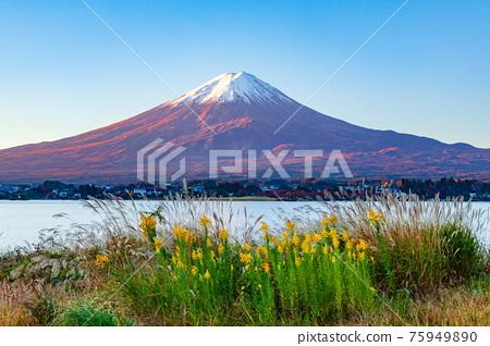 富士山 秋天 秋 75949890
