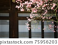 아름다운봄,현충사 75956203
